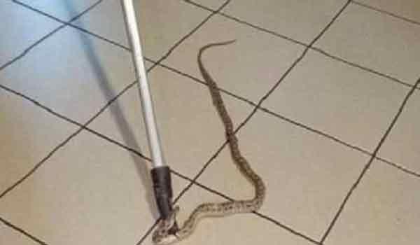 Απροσκλητος επισκέπτης! Ενα φίδι αναστάτωσε θαμώνες σε καφέ της Ναυπάκτου