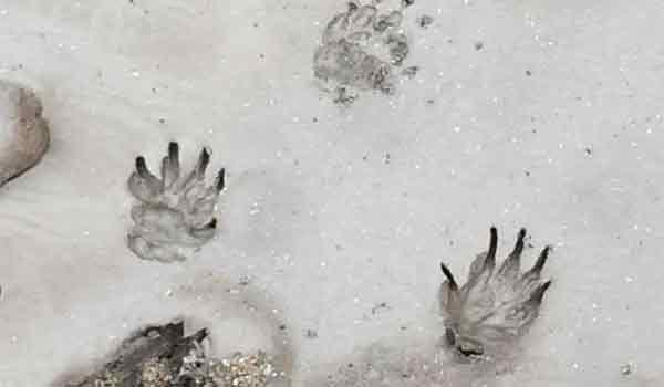 Λυθηκε το μυστήριο για το παράξενο πλάσμα που σκότωσε κτηνοτρόφος