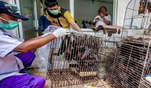 Είναι οριστικό: Aπό τις νυχτερίδες ξεκίνησε η επιδημία του κοροναϊού – Τι απέδειξαν οι έρευνες