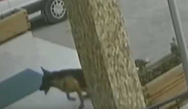 Τραυματισμένος σκύλος πήγε μόνος του σε νοσοκομείο, τον φρόντισαν και έφυγε