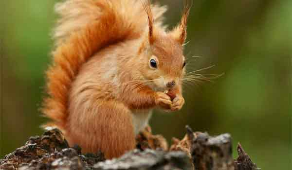 Αυτό που έτρωγε ο σκίουρος ξάφνιασε τη νταντά και τα παιδιά