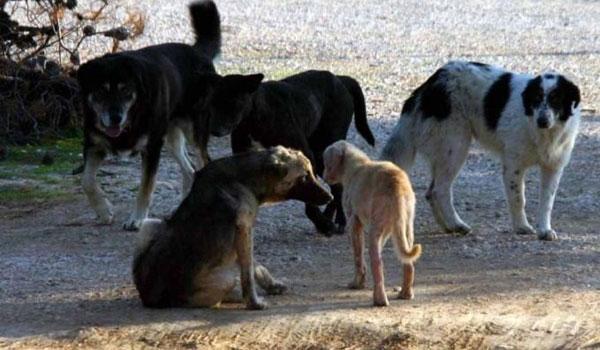 Κτηνωδία: Δολοφόνησαν 26 σκυλιά στη Φλώρινα