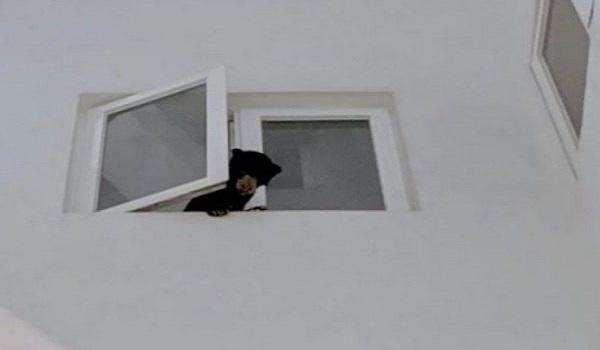 Νόμιζε πως πήρε σκύλο στο σπίτι αλλά ήταν αρκούδα