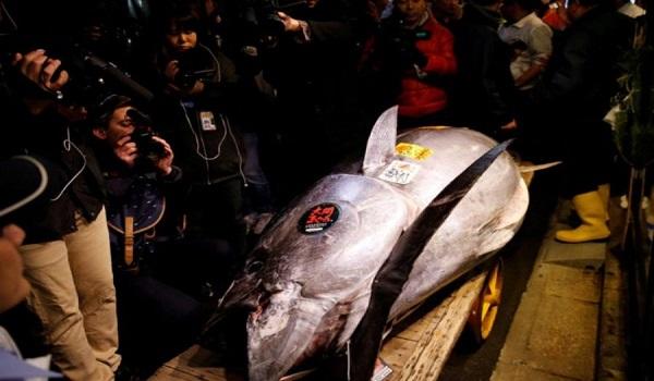 Ενα ψάρι αξίας  2,7 εκατομμυρίων ευρώ