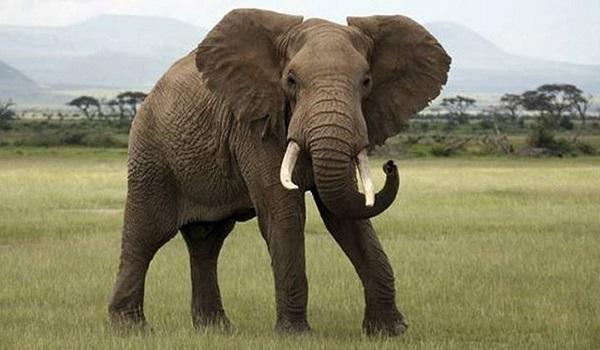 Αυτός ο ελέφαντας δε θέλει να τον φωτογραφίζουν και είναι ξεκάθαρος