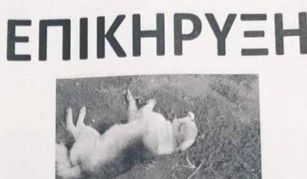 Οργή στην Αμφιλοχία: Επικήρυξε με 2.000 ευρώ το δράστη που σκότωσε τον σκύλο του