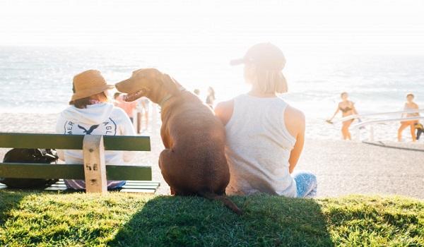 Απαγορεύονται τα σκυλιά μέσα στη θάλασσα - Όλα όσα πρέπει να ξέρετε