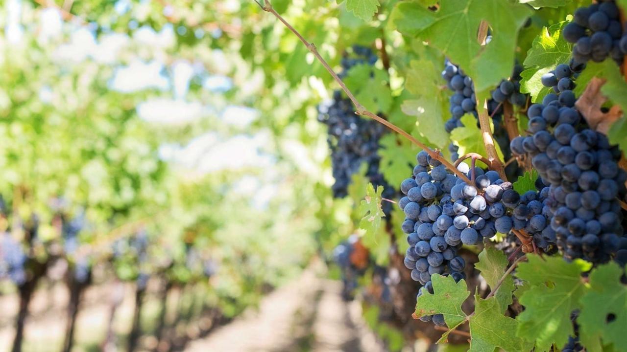 Η κλιματική αλλαγή απειλεί το κρασί.  Αν η άνοδος της θερμοκρασίας ξεφύγει από κάθε έλεγχο