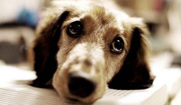 Απαγόρευση κυκλοφορίας: Τι πρέπει να κάνει κάποιος που φροντίζει αδέσποτα ζώα