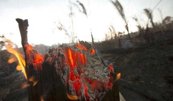 Αμαζόνιος: Οι φλόγες συνεχίζουν το καταστροφικό τους έργο - 1.113 νέες εστίες φωτιάς
