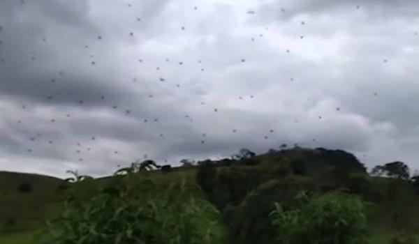 Βροχή από αράχνες στην Βραζιλία