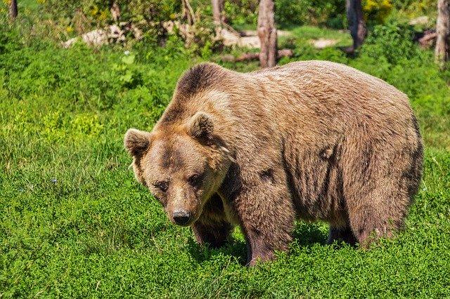 Η συγκλονιστική περιγραφή του 26χρονου που έδωσε μάχη σώμα με σώμα με αρκούδα