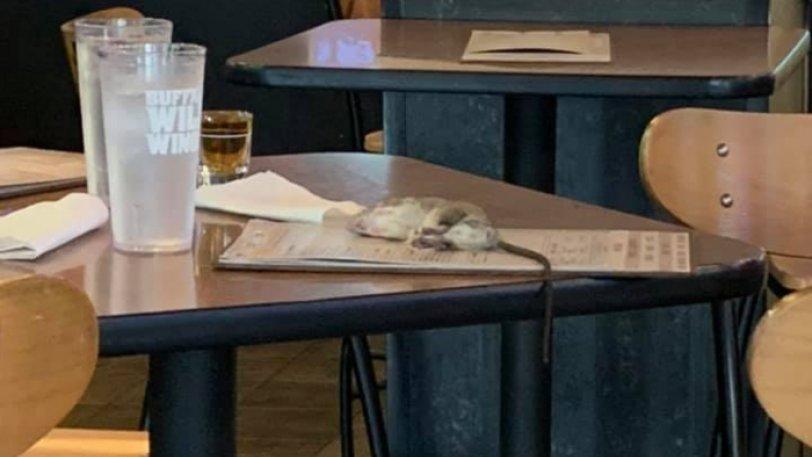 Ζωντανός αρουραίος προσγειώθηκε στο τραπέζι πελάτισσας