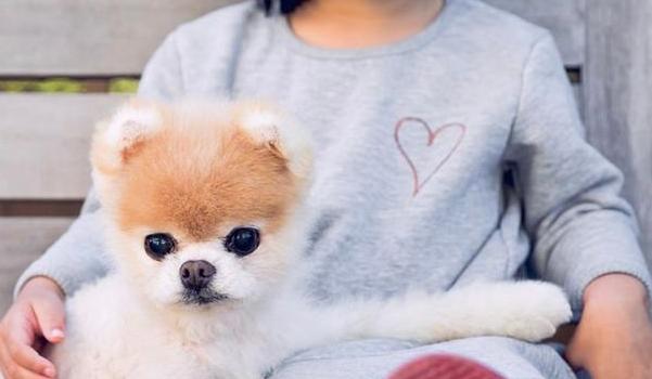 Πέθανε ο Βοο το πιο χαριτωμένο σκυλί του κόσμου