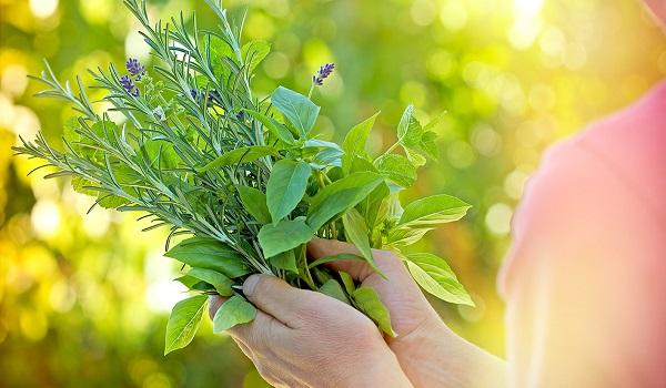 Υπέρταση: Αυτά είναι τα τρία πιο δραστικά βότανα που ρυθμίζουν την πίεση