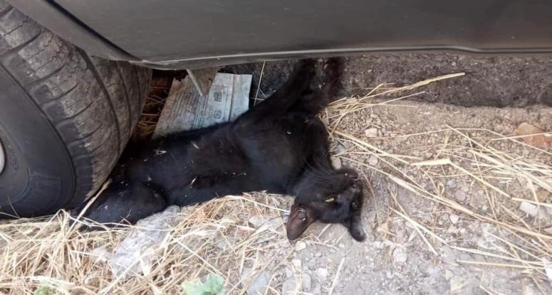 Πάρκαρε το αυτοκίνητο του επάνω σε ένα ζωντανό γατάκι και ενοχλήθηκε όταν πήγε  η πυροσβεστική