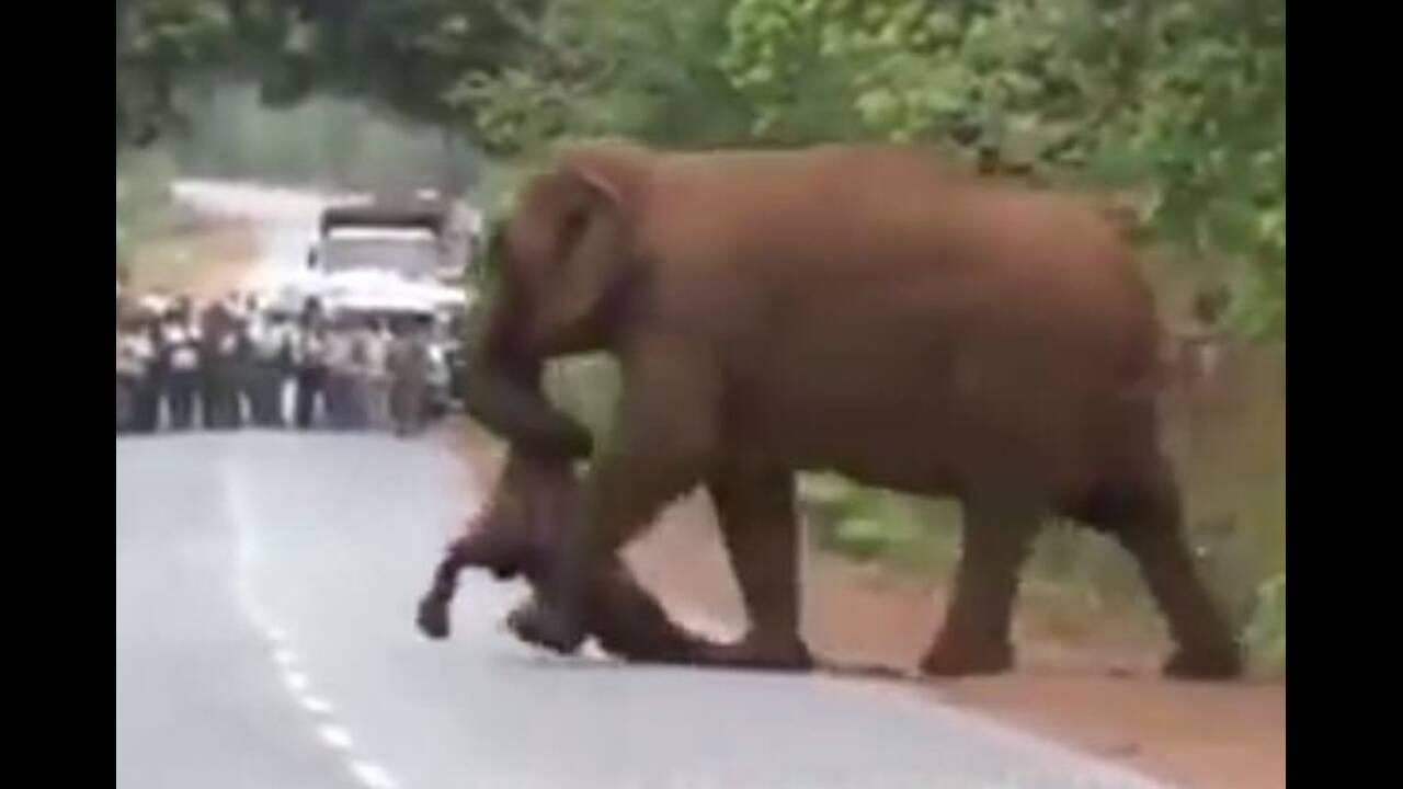 Το βίντεο που συγκίνησε τoν πλανήτη: Ελέφαντες κηδεύουν το νεκρό ελεφαντάκι τους