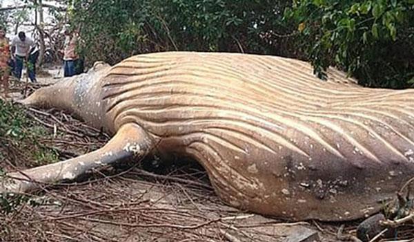 Μυστήριο με φάλαινα που βρέθηκε νεκρή σε δάσος στον Αμαζόνιο