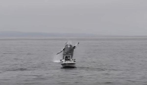 Το βίντεο που έγινε viral: Φάλαινα πηδά δίπλα σε βάρκα ψαρά