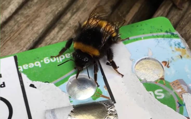 Τι σχέση μπορεί να έχουν οι πιστωτικές κάρτες με τις μέλισσες;