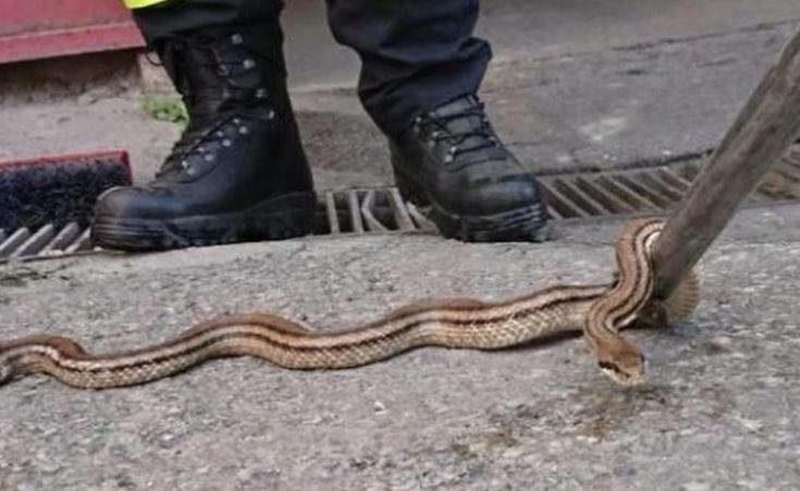 Φίδι έκανε βόλτα στο κέντρο του Βόλου