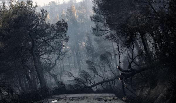 Κρανίου τόπος η Εύβοια: 25.000 στρέμματα έχουν καεί. Μάχη με τις αναζωπυρώσεις