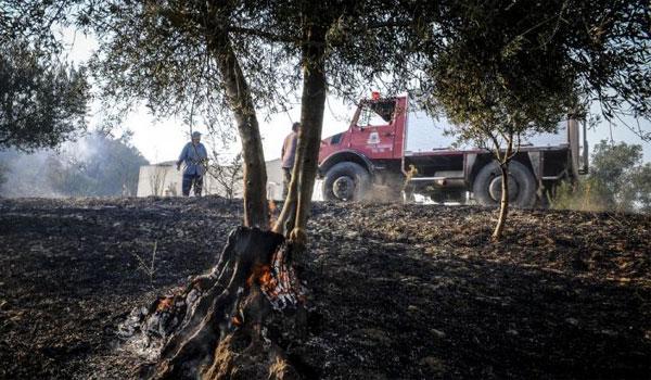 Σε ύφεση το μέτωπο της φωτιάς στην Ηλεία. Μάχη με τις αναζωπυρώσεις