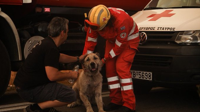Εύβοια φωτιά: Η μάχη των κατοίκων να σώσουν τα ζώα τους