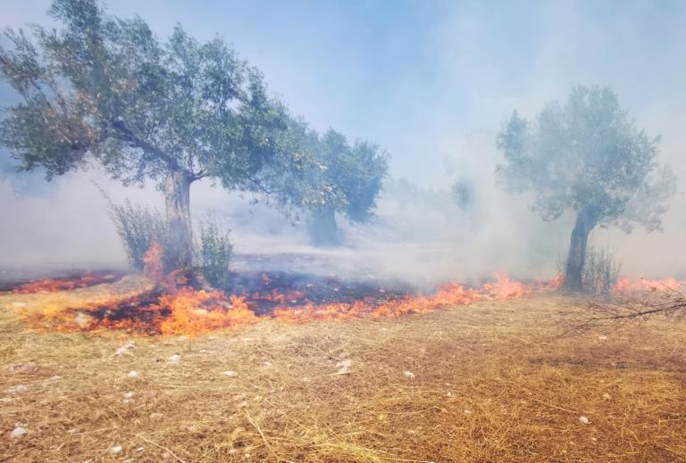 Μεγάλη πυρκαγιά στον Ασπρόπυργο – Άμεση κινητοποίηση της Πυροσβεστικής