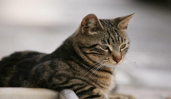 Λαμία: Λυκειάρχης πυροβόλησε εν ψυχρώ γάτο και τον άφησε παράλυτο