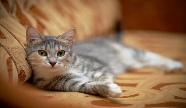 Αυτή είναι η «μουτρωμένη» γάτα που έγινε viral! [Βίντεο]