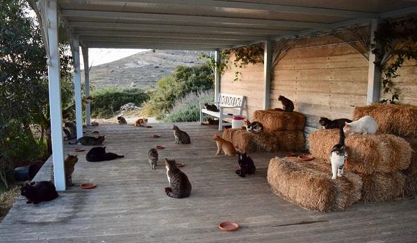 Σύρος: Η αγγελία για την ιδανική δουλειά - Να παίζεται με γάτες