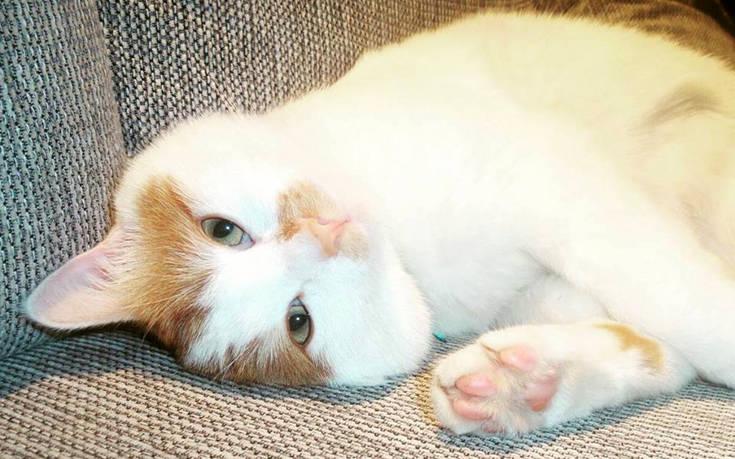 Ο γάτος πρόσφυγας της Ειδομένης που έγινε viral ζει πλέον στη Σουηδία