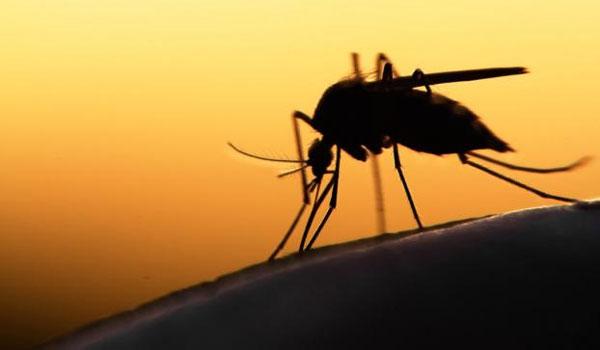 Προφυλαχθείτε από τα κουνούπια και τον ιό του Δυτικού Νείλου - Οδηγίες