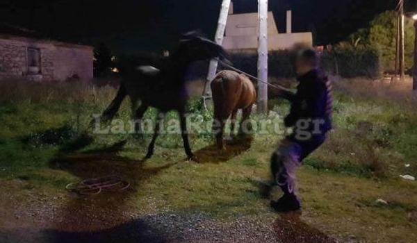 Λαμία: Κυνηγούσαν τα άλογα μέσα στην πόλη