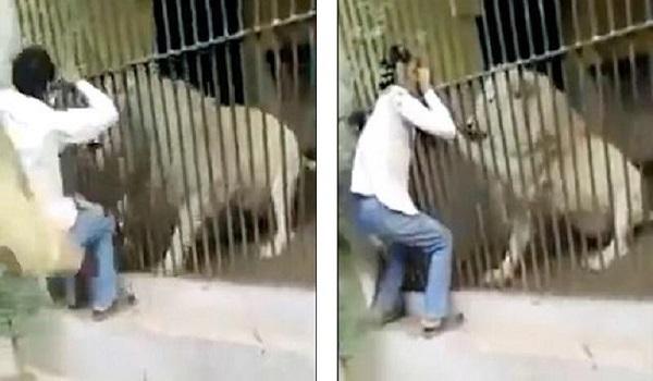 Το λιοντάρι του γράπωσε το χέρι μέσα από το κλουβί, το δάγκωνε και δεν το άφηνε