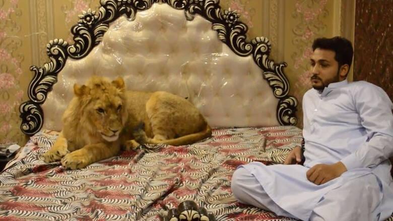 Όχι μόνο έχει λιοντάρι για κατοικίδιο αλλά το αφήνει ελεύθερο στο σπίτι του