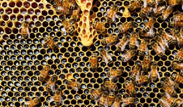 Οι  μέλισσες ξέρουν μαθηματικά - Κάνουν προσθέσεις και αφαιρέσεις