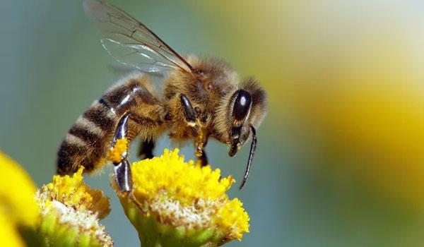 Τι θα συμβεί στην ανθρωπότητα αν εξαφανιστούν οι μέλισσες;