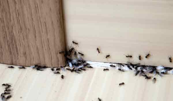 Τι να κάνετε για να απαλλαγείτε από τα μυρμήγκια στο σπίτι