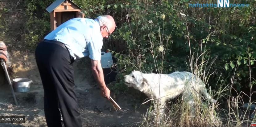 Ναυπακτία - Γαβρολίμνη: O σκύλος που μένει 18 μήνες εκεί που σκοτώθηκε το αφεντικό του