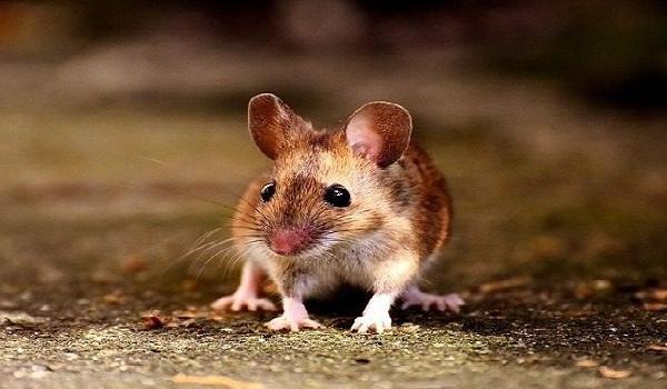 Απίθανη φωτογραφία: Ποντίκια παίζουν μπουνιές στο μετρό του Λονδίνου
