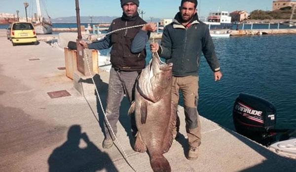 Σύρος: Ψάρεψαν σφυρίδα 63 κιλών! Η ψαριά της χρονιάς