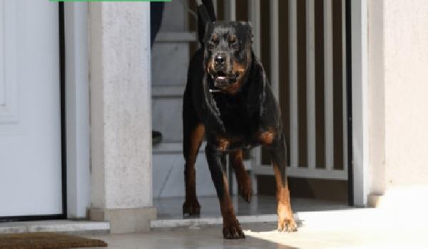 Τραγωδία με βρέφος στα Γλυκά Νερά: Οι γονείς θα αποφασίσουν για την τύχη του σκύλου