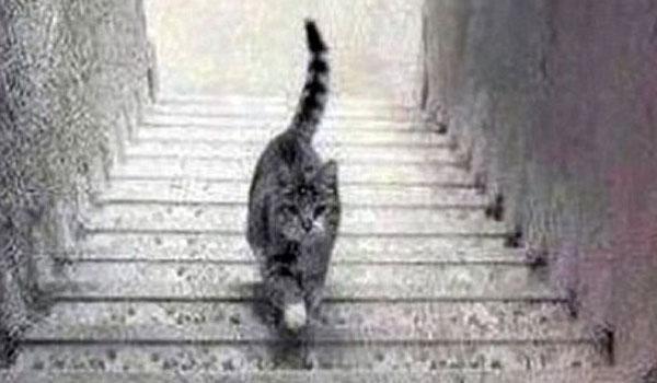 Η γάτα που διχάζει το διαδίκτυο. Ανεβαίνει ή κατεβαίνει τα σκαλιά;
