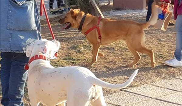 Αποτέλεσμα εικόνας για Πάρκο σκύλων στο Ηράκλειο Κρήτης