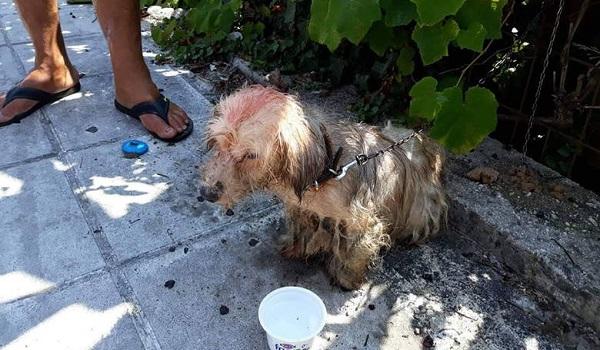Κέρκυρα: Πρόστιμο - μαμούθ  σε άνδρα που περιέλουσε σκύλο με πετρέλαιο
