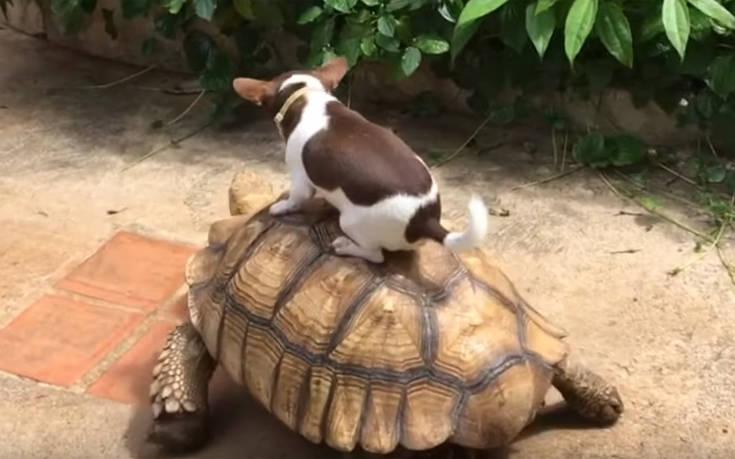 Αυτός ο σκύλος βρήκε το πιο απίθανο μεταφορικό μέσο