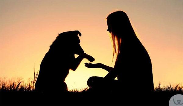 Τελικά πόσο χρονών είναι οι σκύλοι σε ανθρώπινα χρόνια;