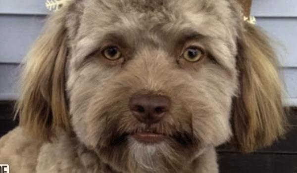 Ο σκύλος που μοιάζει με άνθρωπο τρέλανε το διαδίκτυο και έγινε viral!